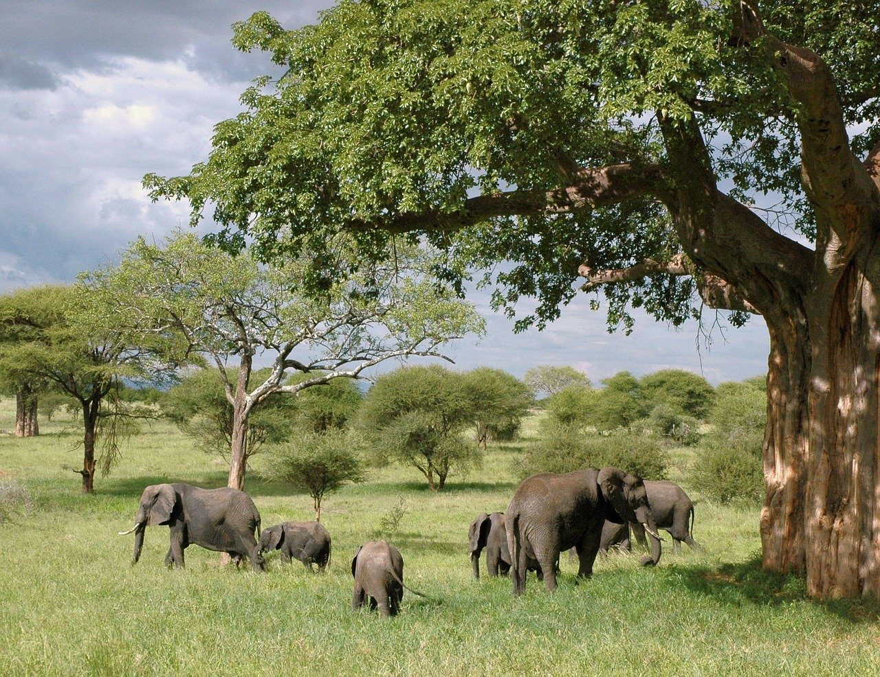 La protection des animaux en Tanzanie
